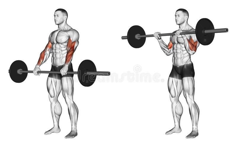 Exercising. Curl with a barbell grip on top royalty free illustration