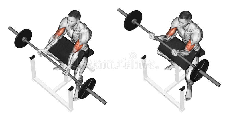 Exercising. Curls on the bench royalty free illustration