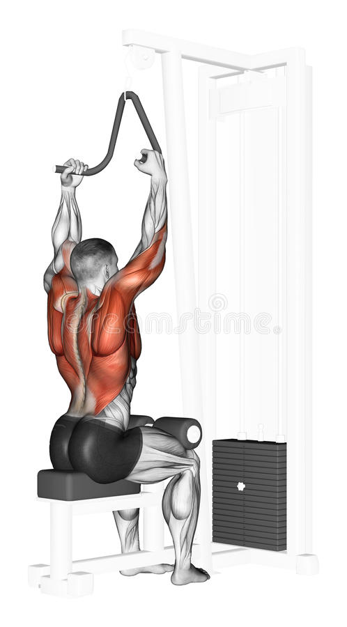 Exercising. End of the upper block narrow grip. End of the upper block narrow grip. Exercising for bodybuilding Target muscles are marked in red royalty free illustration