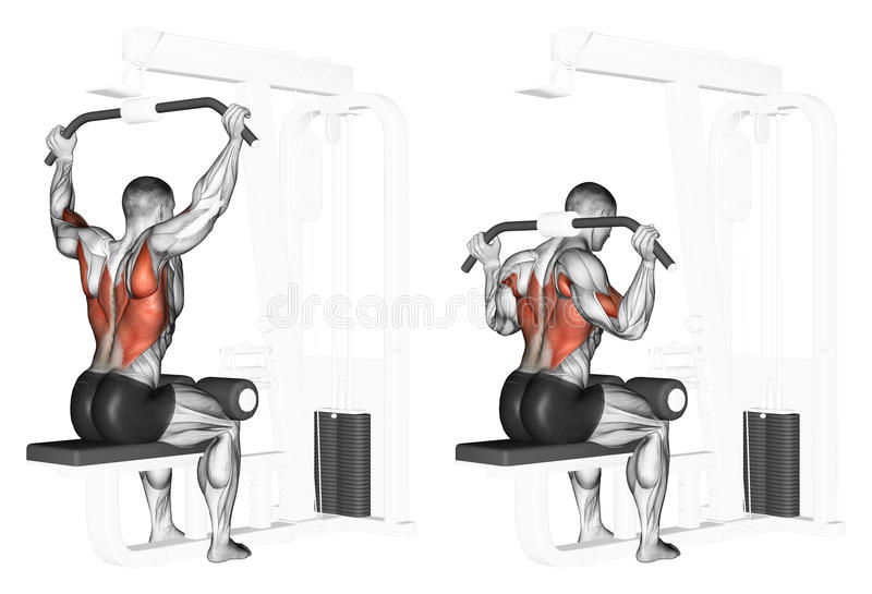 Exercising. End of the upper block of the neck. End of the upper block of the neck. Exercising for bodybuilding. Target muscles are marked in red. Initial and royalty free illustration