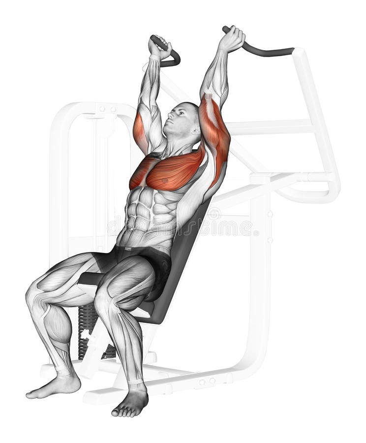Exercising. End of the upper block on the simulato. End of the upper block on the simulator. Exercising for bodybuilding Target muscles are marked in red royalty free illustration