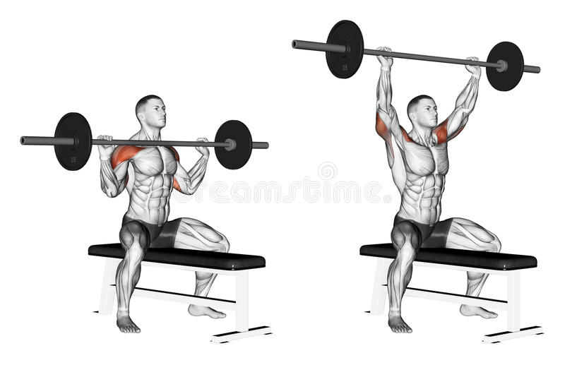 Exercising. Press of a bar with a chest sitting vector illustration