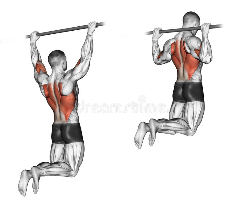 Exercising. Pull-ups on the bar, touching the back royalty free illustration