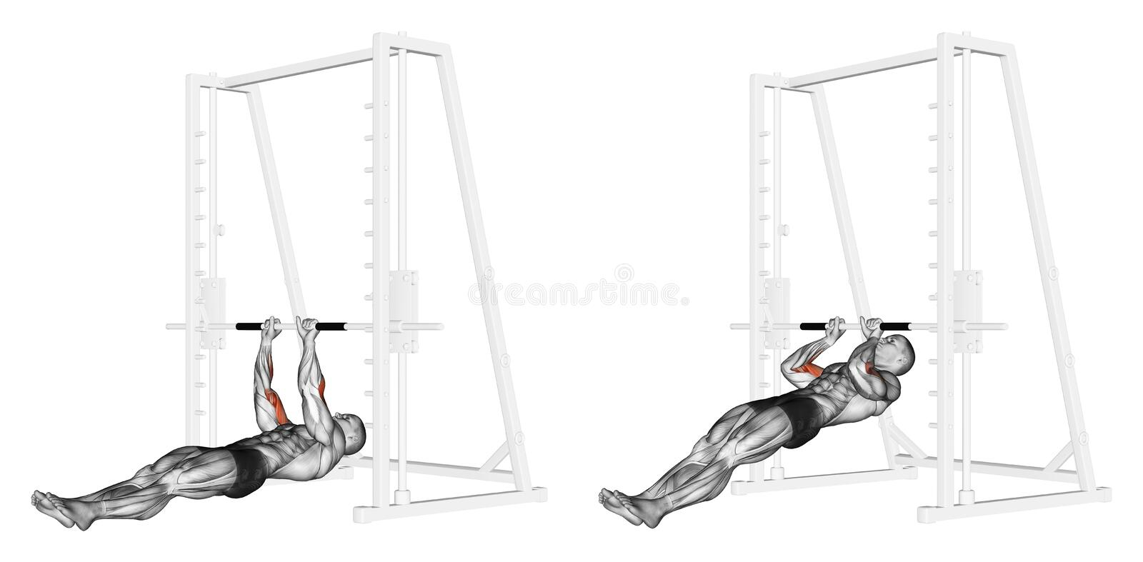 Exercising. Pull-ups on the brachialis royalty free illustration