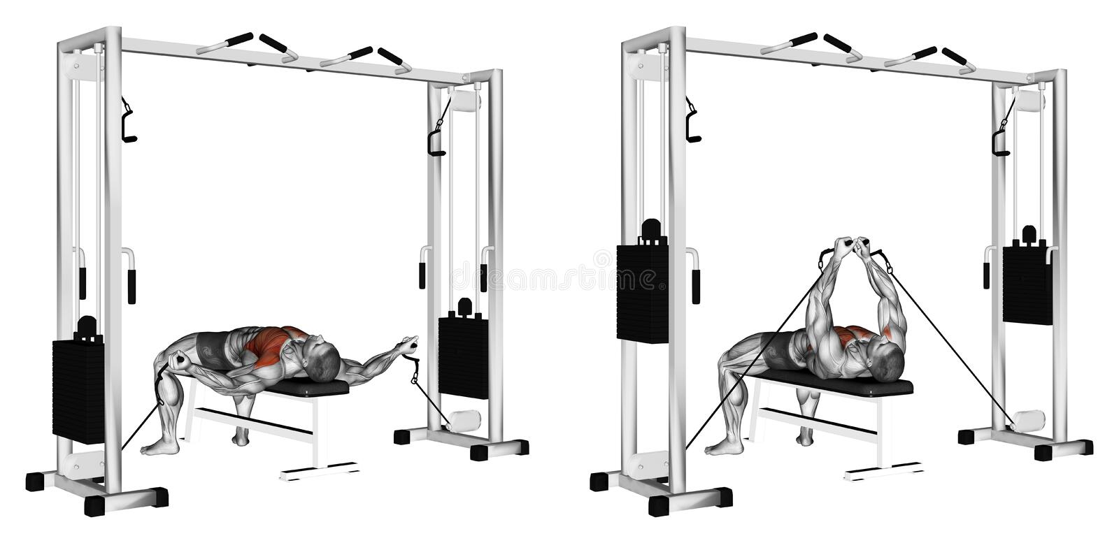 Exercising. Reduction of arms to lower block. Reduction of arms to lower block. Exercising for bodybuilding Target muscles are marked in red. Initial and final royalty free illustration