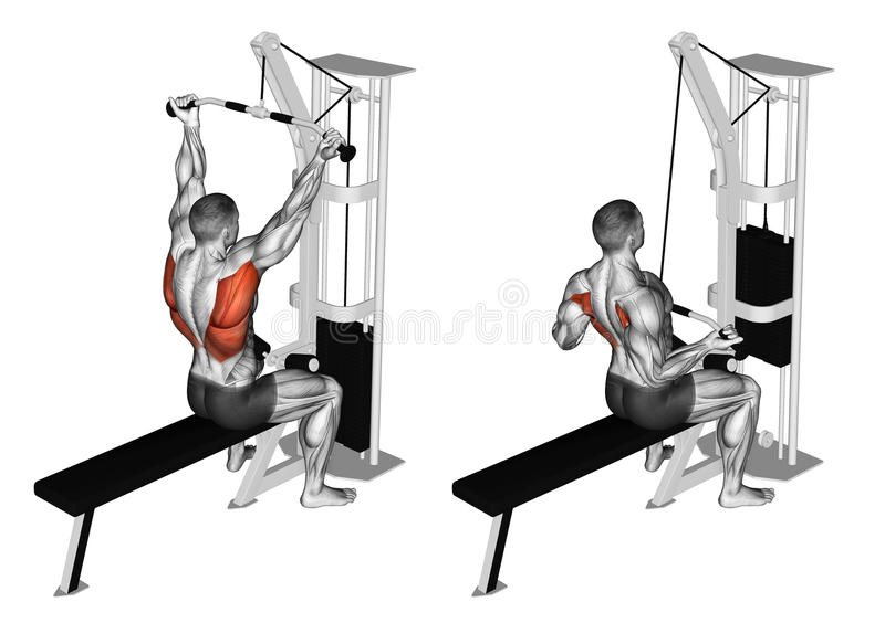 Exercising. Reverse grip lat pulldown. Reverse grip lat pulldown. Exercising for bodybuilding Target muscles are marked in red royalty free illustration