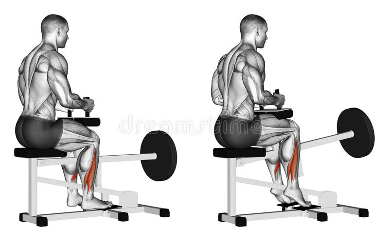 Exercising. Rise on toes for soleus in simulator stock illustration