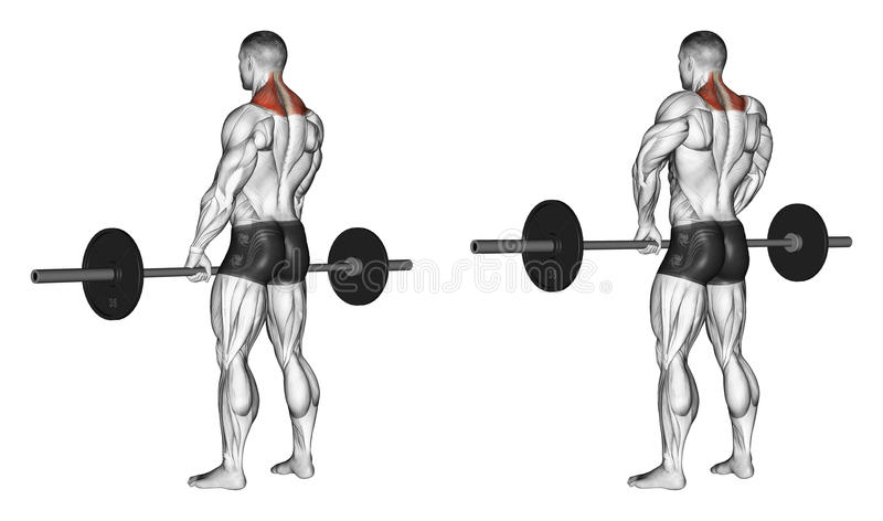 Exercising. Shrugs with barbell stock illustration