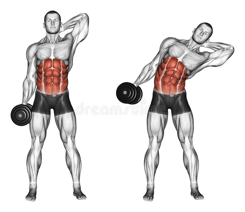 Exercising. Side slopes of standing. Side slopes of standing. Exercising for bodybuilding. Target muscles are marked in red. Initial and final steps stock illustration