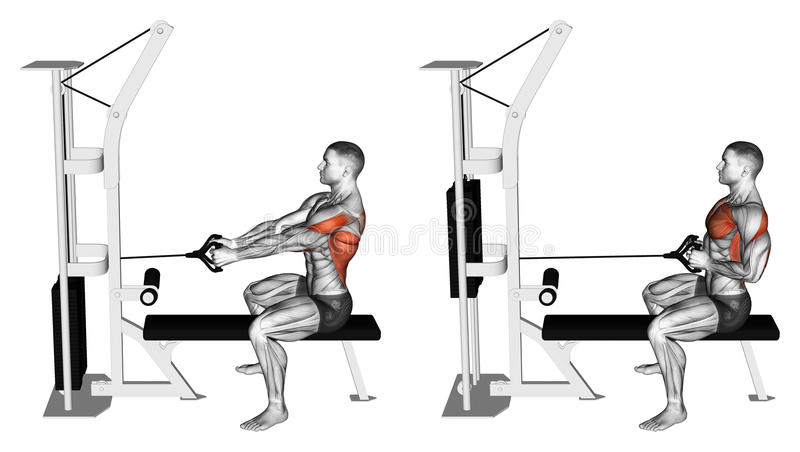 Exercising. Thrust block simulator to sitting on the bench. Thrust block simulator to sitting on the bench. Exercising for bodybuilding Target muscles are marked stock illustration
