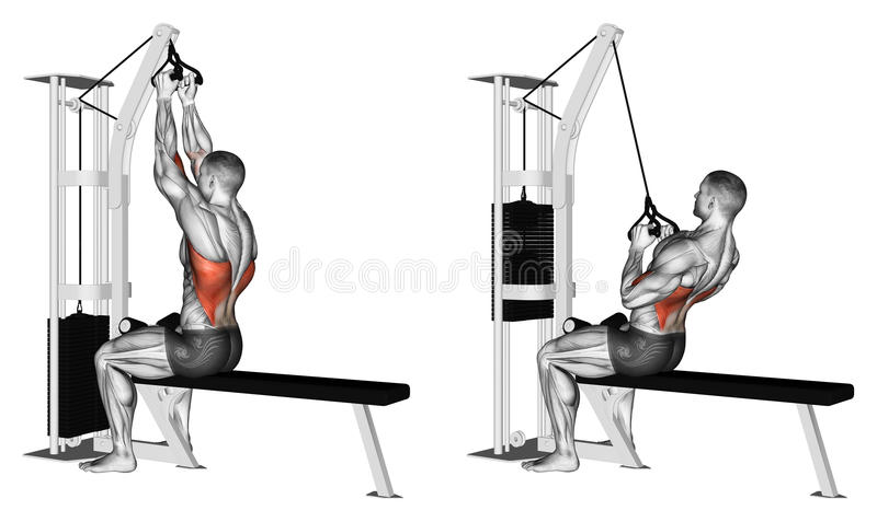 Exercising. Thrust of the upper block parallel grip. Thrust of the upper block parallel grip. Exercising for bodybuilding Target muscles are marked in red stock illustration