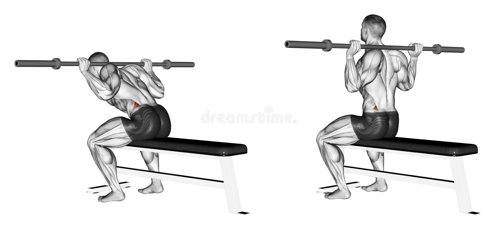 Exercising. Ups with a good morning sitting. Ups with a good morning sitting. Exercising for bodybuilding. Target muscles are marked in red. Initial and final stock illustration